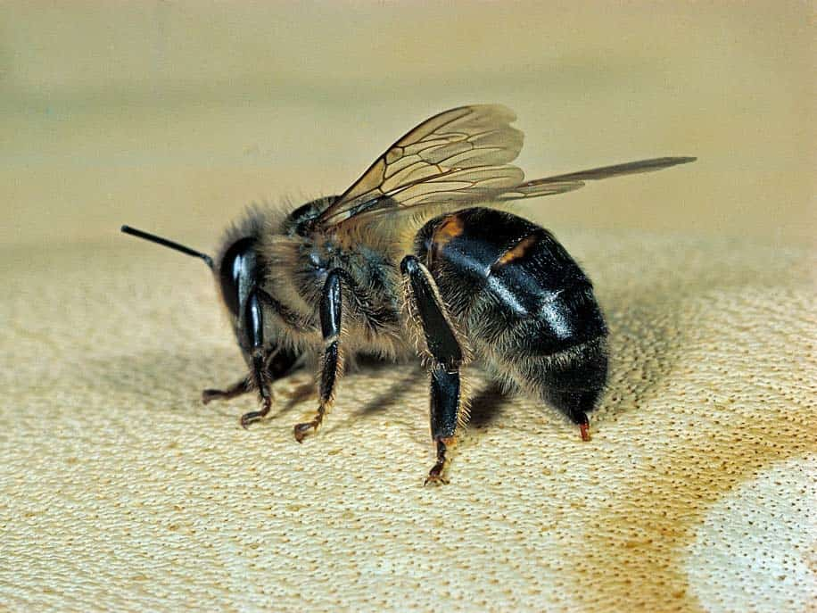 Does Bee Venom Actually Benefit Skin?